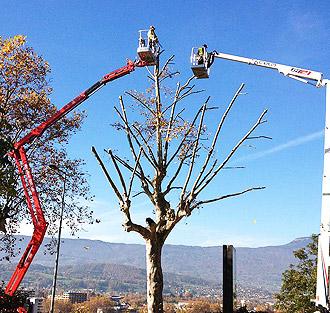 Attrezzi potatura alberi alto fusto